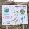 カタクリの花群生地(信更町田沢地区)