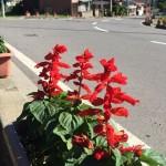 原市場花を楽しむ会